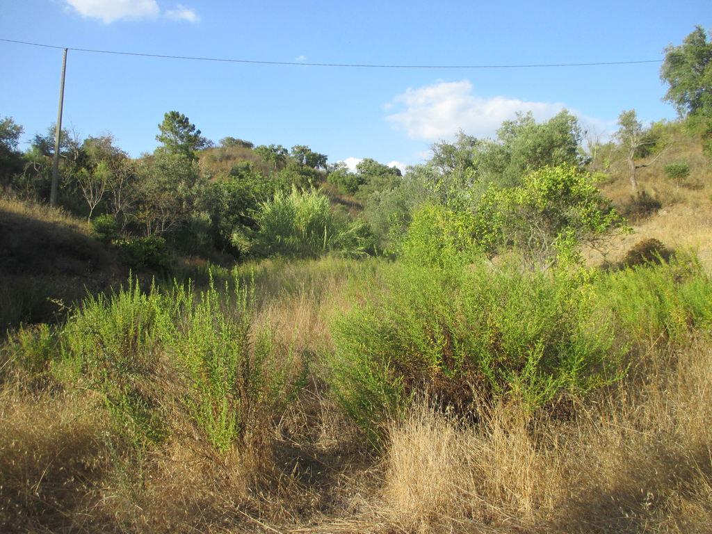 Portugalissimo - Selbstversorger Grundstücke - Freizeitgrundstück Algarve