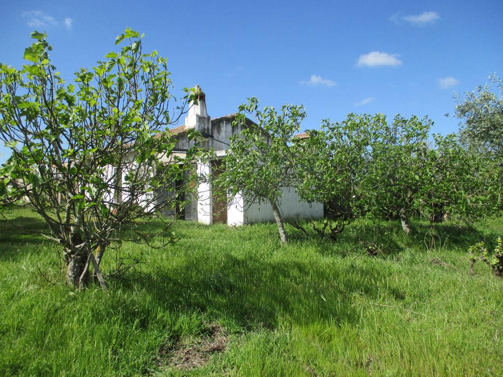 Portugalissimo - Selbstversorger Grundstücke - Tapada das Cancelas