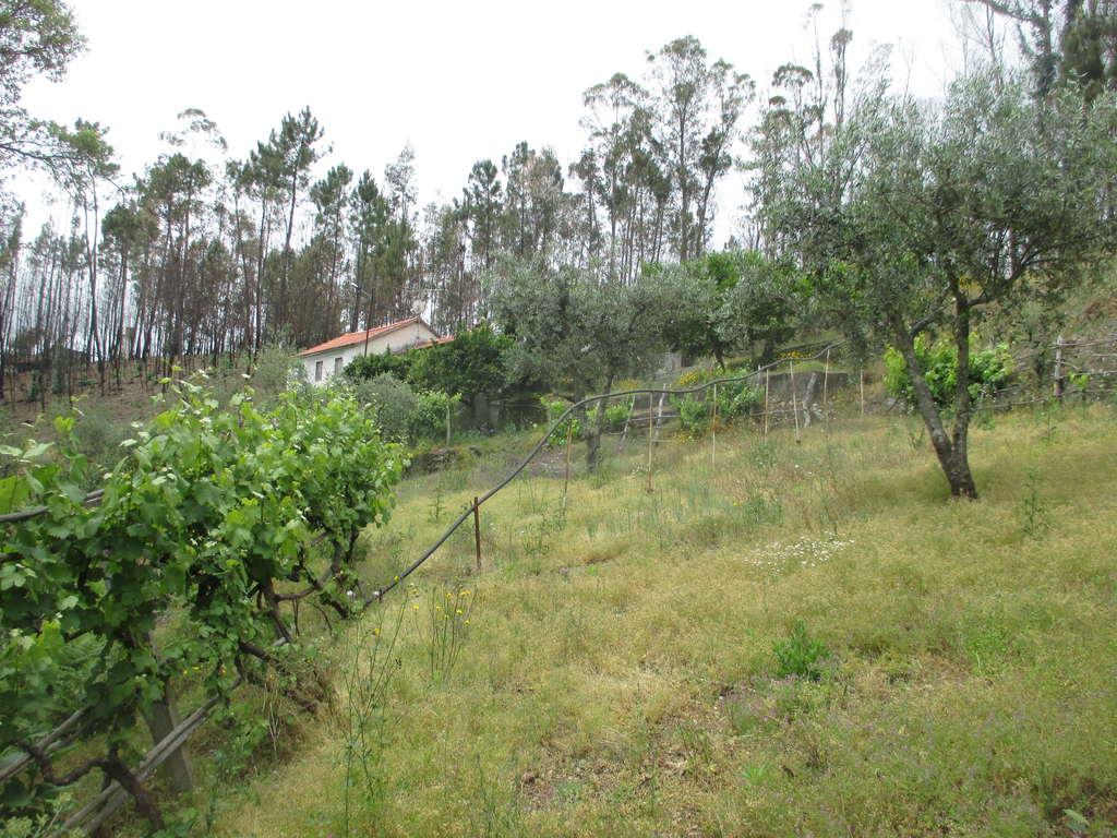 Portugalissimo - Selbstversorger Grundstücke - Povoa de Alegria
