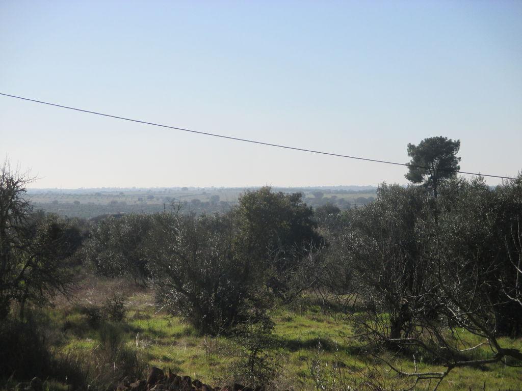 Portugalissimo - Selbstversorger Grundstücke - Nisa Faustino